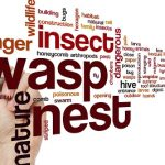 How to Deal With Wasps and Bees in Your Home?