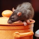 Health Risk caused by Rats and Mice during Flooding