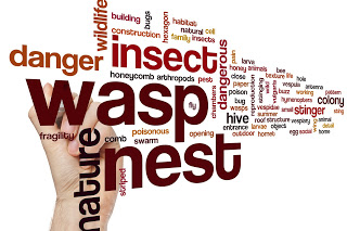 Wintertime Wasps Help and Advice