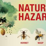 How to Safely Remove Wasp Nests from Your Home or Business?
