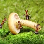 Looking for a Solution to Your Ant Pest Control Problems at Home?
