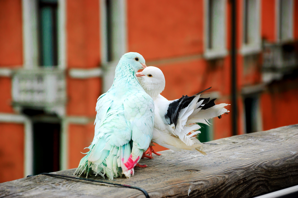 Pigeons be gone! - FREE Pigeon Pest Control Information