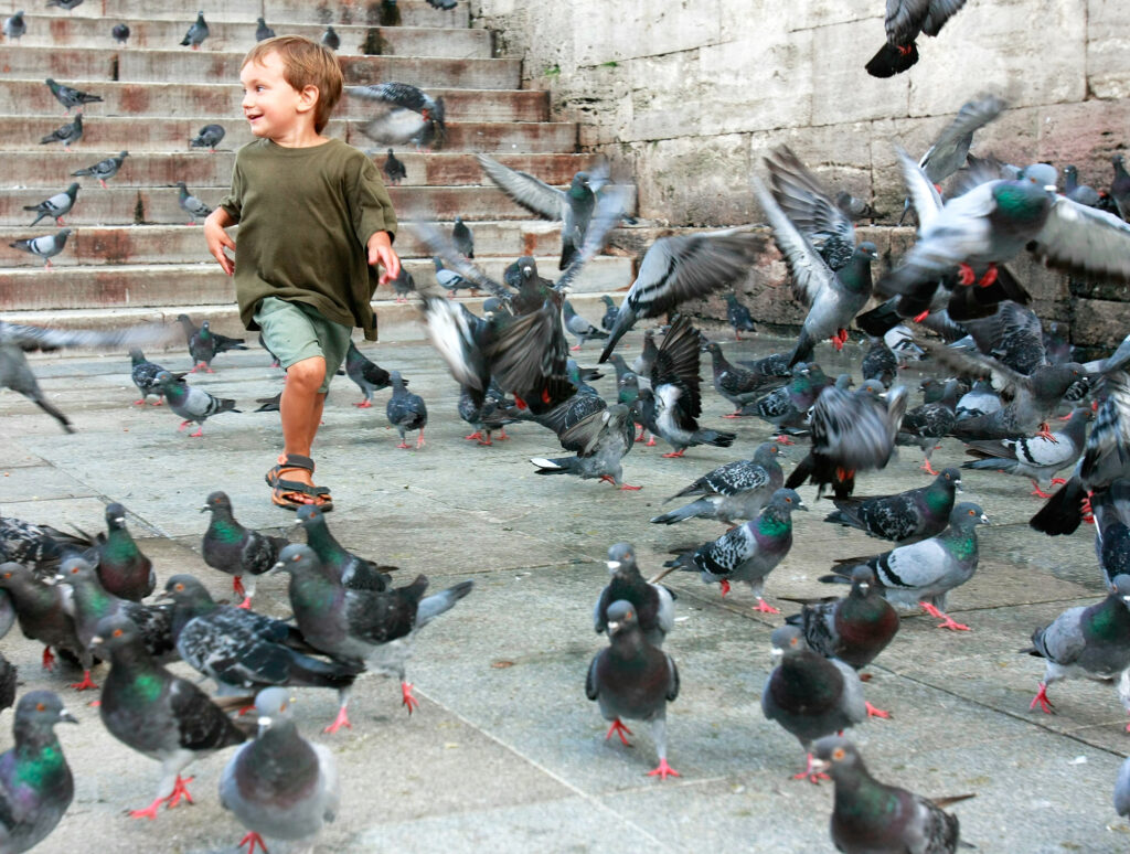 Town Centre Pigeon Problems. Do You & Your building Need Protection? A boy running among pigeons